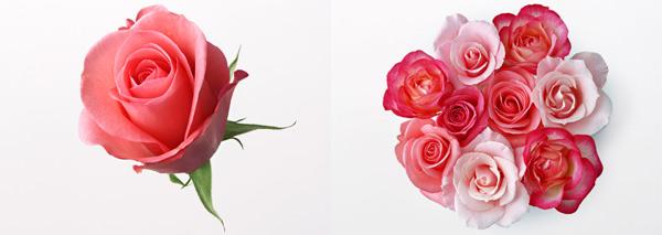 唯美的鲜花素材