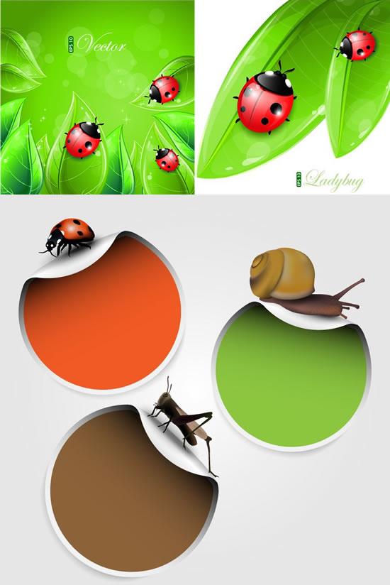 树叶昆虫背景素材
