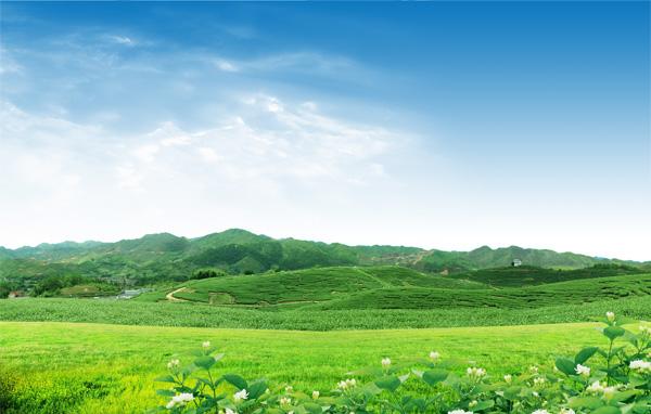 绿色山坡茶园-田园风光高清图库-名片之家
