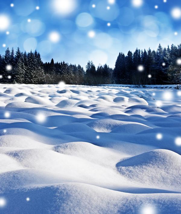 冰雪覆盖的树林-自然风景高清图库-名片之家