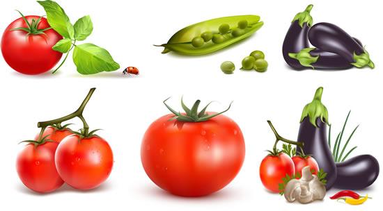 高清蔬菜矢量素材