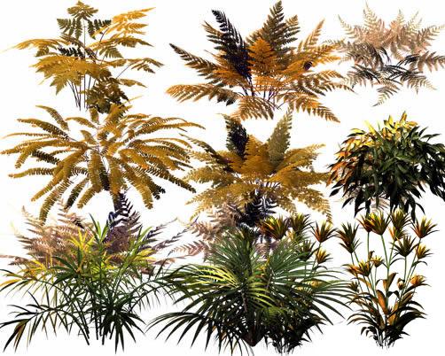 纪蕨类植物psd-花草树木高清图库-名片之家