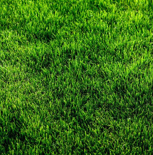 wallpaper ground grass