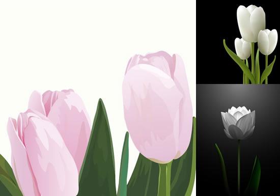 郁金香花卉素材