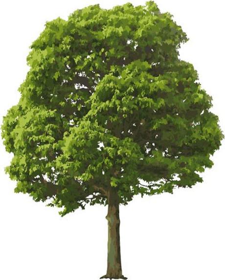 茂盛绿树矢量素材