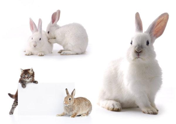 壁纸 动物 猫 猫咪 兔子 小猫 桌面 600_424