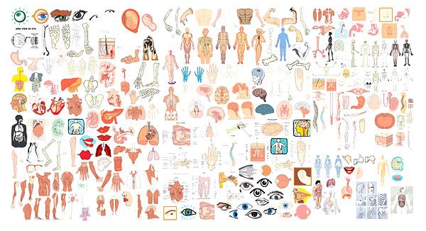 人体结构器官部位