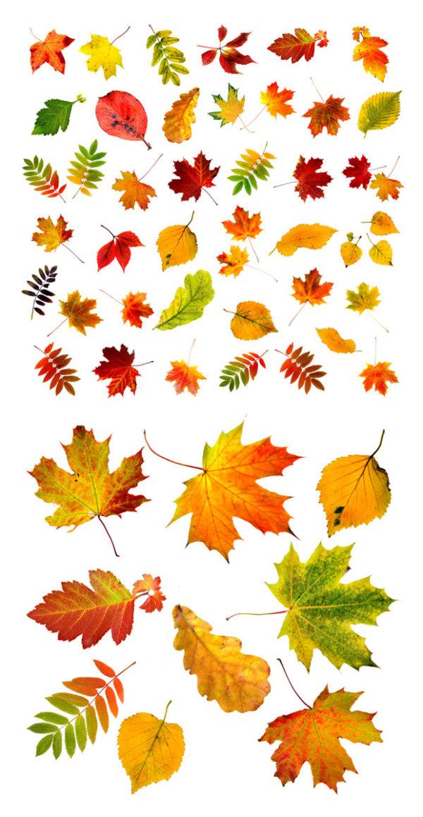 秋天的树叶素材