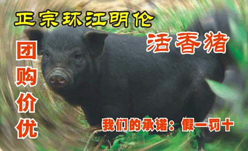 河池市环江明伦(活香猪)特售部名片模板免费下载