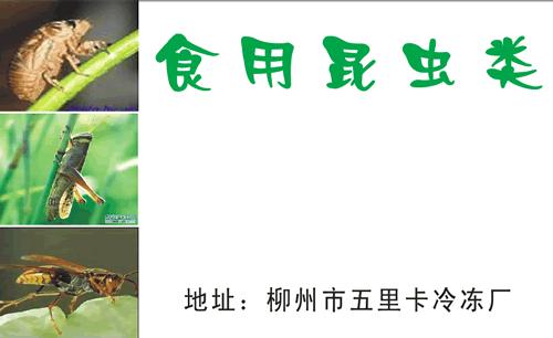 食用昆虫类; 蜂蛹名片模板_名片设计之家; 食用昆虫类名片_食用昆虫类