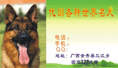 名片设计之家 仿制名片模板 宠物花鸟名片  上传于:2011-08-07 11:13