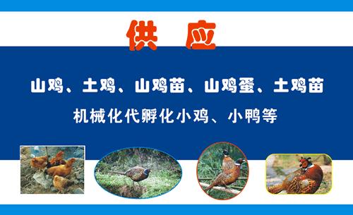 环江县拉才养殖场名片设计欣赏