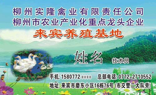 鸭子,彩色背景,花,水,树,草地,饲料,兽药,来宾等相关的名片设计模板源