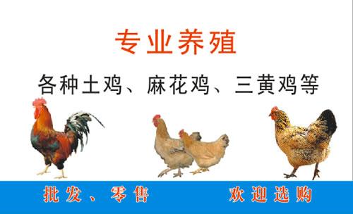 广西鹿寨五里亭养鸡场名片设计欣赏
