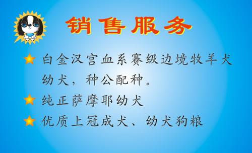 柳州市靓贝宠物食品有限公司狗粮名片模板免费下载图片